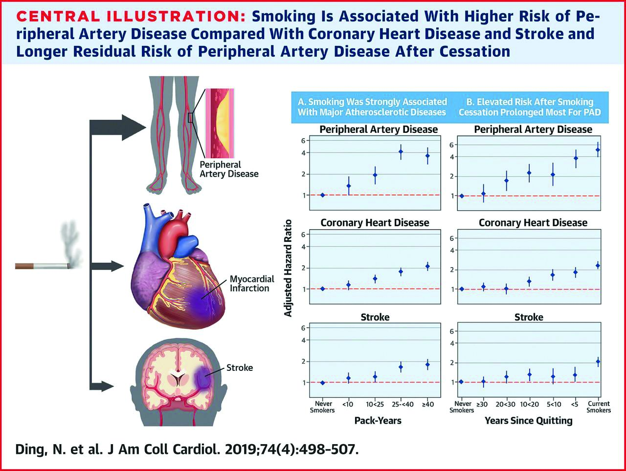 Illustration, charts: smoking, PAD. A significantly increased risk for PAD persisted for up to 30 years after smoking cessation among adults with no previous history of PAD.