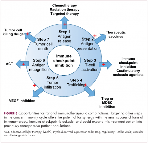 Figure 3. Immunotherapies. Opportunities for rational immunotherapeutic combinations.