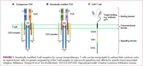 Figure 1 immunotherapies and heme malignancies - genetically modified T-cell receptors for cancer immunotherapy