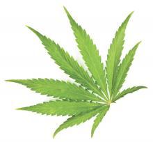 A marijuana leaf is displayed.