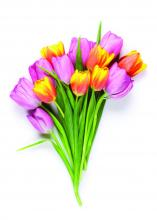 tulip flowers bouquet