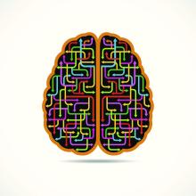 A cartoon brain with colored arrows inside pointing in different directions.
