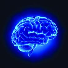 A computer graphic of a blue-colored brain.