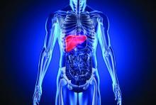 Illustration of human liver